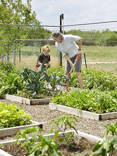 An enviable backyard vegetable garden!