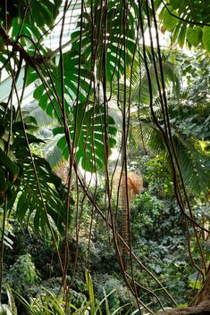 Tropical Forest, Tropical Garden, Tropical Plants, Plant Aesthetic, Nature Aesthetic, Jungle Pictures, Jungle Art, Tropical Landscaping, Green Nature