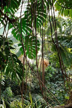 Tropical Forest, Tropical Garden, Tropical Plants, Jungle Pictures, Jungle Art, Jungle Scene, Plant Aesthetic, Nature Photos, Mother Nature