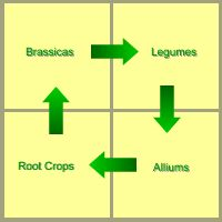 Crop rotation to reduce pests from The Gardeners Calendar