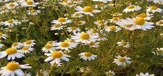 Todas las Plantas de exterior resistentes al sol tienen un requerimiento especial, así que se comete el error frecuente de no considerar el tipo de planta y