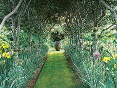 Grass pathway. Looks like daffodils lining it. Tree canopy overhead.