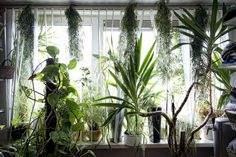 interior Plants. #plants #indoorjungle #houseplants