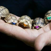 Baby Ninja turtles, lol