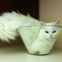 Cute.  My cats would try to do this, too.