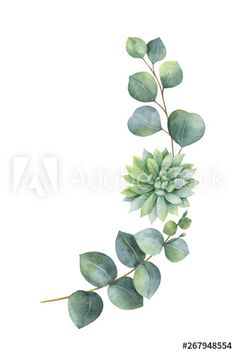 Leaf Cookies, Eucalyptus Leaves, Succulents, Wreaths, Watercolor, Plants, Image, Products, Pen And Wash