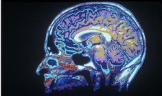 A Brief Guide to Neuroscience