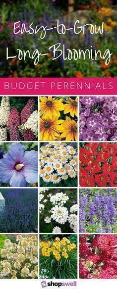 These 16 garden perennials feature a long blooming season, easy-to-grow properties, and a budget-friendly price. Shop perennials from this collection now. #gardentip