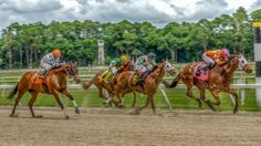 horse race hdr - horses, track, race, sand, hdr Horse Wallpaper, Free Horses, Horse Racing, Hdr, Camel, Beautiful Pictures, Track, Animals, Animales