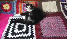 https://flic.kr/p/uiupRR   Fat Boy Cat on my Crochet Colourful Granny Square Patchwork Blanket by sharron wilcock