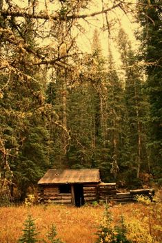 .We used to find old cabins like this down the fire lanes when I was a kid. They seem to be gone now . Was I a kid that long ago?