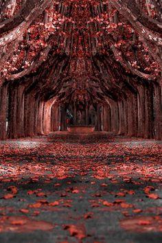 Like a Dream Forest! by Tony Goran