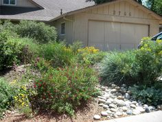 No lawn required. - All About Gardens Vegetable Garden For Beginners, Gardening For Beginners, Gardening Tips, California Native Plants, Front Gardens, Rustic Gardens, Outdoor Plants, Front Yard Landscaping, Lawn