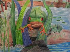 Young Artists display incredible talent and interest in amphibians. View the winners gallery for the Frogs Are Green Kids Art Contest.