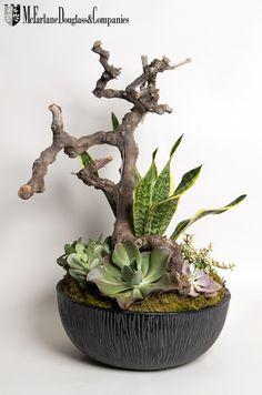 we love succulents. Really interesting textures and shapes. Really interesting textures and shapes. Succulents In Containers, Cacti And Succulents, Planting Succulents, Cactus Plants, Succulent Gardening, Succulent Terrarium, Container Gardening, Cacti Garden, Fairies Garden