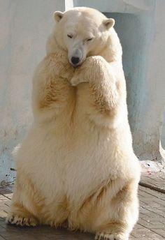 white bear in a mood