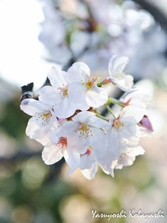 When you plant a seed of love, it is you that blossoms ~ Ma Jaya Sati Bhagavati Photo@8270chihaya