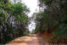 Bosques hacia Sant Boi de Llobregat . Fotografía: María José Reyes Reyes, Country Roads, Forests, Bass, Events, Scenery, Fotografia