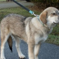 Ice (geplaatst) | Dog Rescue Greece