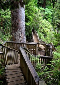 Auckland. One moment you are on the highway, the next you are in the wilderness. The path descends deep down into the rainforest on the way to the Huka falls.