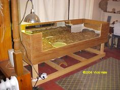 Russian Tortoise table.    I like the plexiglass side for viewing.
