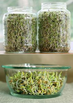 """""""Ridiculously easy way to grow sprouts for your lunch."""" Small Garden Ideas #garden #gardening"""