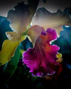 orquídeas raras - Pesquisa Google