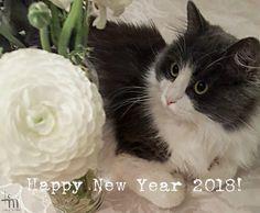 Hyvää Uutta Vuotta 2018 - Happy New Year 2018 Siitä miten vuosi meillä vaihtuu kerron blogissa. #uusiblogipostaus #newblogpost #linkkibiossa #linkinmybio #hyvääuuttavuotta #happynewyear #kissa #cat #catlovers #cststagram #petlovers #cutenessoverload #micuthecat #lifestyleblogger #nelkytplusblogit #åblogit #ladyofthemess