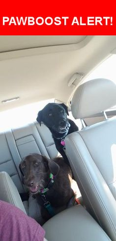 Please spread the word! Lauren was last seen in Sappington, MO 63128.  Message from Owner: She has an underbite.  Her name is lauren.  The black lab in the picture.  Lost near sakura gardens and tesson ferry.  Concord animal hospital said a lady post her on missouri lost pets, but I do not see any posts on that page.  Nearest Address: Near Sakura Dr & Carroll Wood Way