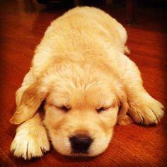 My puppy Memphis!!!