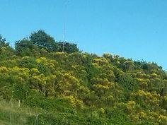 Ginestra hill