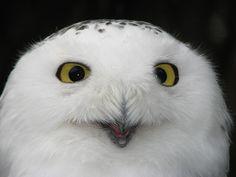 ~~Look deep into my eyes by annkelliott~~