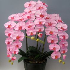 Indoor Balcony Office Rare Orchid Seeds Phalaenopsis Orchid Bonsai Pot home garden plants Flowers seeds 200PCS #>=#>=#>=#>=#> Click on the pin to check out discount price, color, size, shipping, etc. Save and like it!