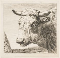 Cow Head from Animals after the First Masters, for Examples in Drawing (London, 1829)