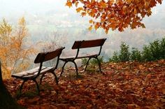 Find a bench. Take a seat. Soak in the beautiful colours of changing leaves.  #autumn #fall