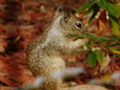 Squirrels. They're just too cute.