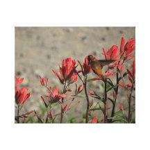 little Hummingbird Gallery Wrapped Canvas