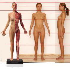 Model Sheet and anatomy study