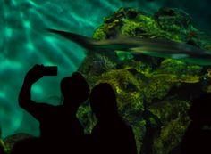 Descargar  Imágenes gratis de  Selfie en el acuario