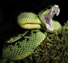 #Snakes, #scorpions, #spiders - Oh my! From our world travel magazine, Outpost Magazine: http://www.outpostmagazine.com/