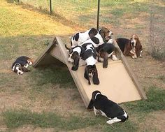 According to a Bassett Hound...no one needs to exercise - instead they should Napercise
