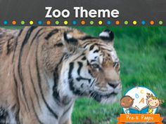 Zoo theme ideas and activities for your preschool, pre-k, or kindergarten classroom.