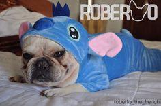 Roberto, the French Bulldog in a Stitch Costume