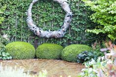 Water Feature Chelsea Flower Show Designed by Cameron & Charlie Albone Plunge Pool, Chelsea Flower Show, Water Features, Beautiful Gardens, Pools, Garden Design, Concrete, Landscapes, Backyard