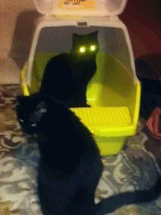 radiation cat
