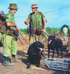 Vietnam War Dogs, Aussie troops
