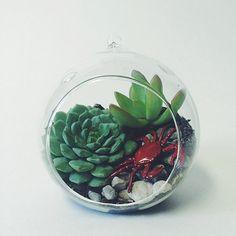 Small Hanging Succulent Terrarium Kit; Terrarium Kit; Succulent Kit; Glass Terrarium; Hanging Terrarium; Tabletop Terrarium; Home Decor