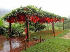 Flor de jade vermemha