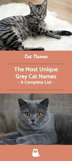 If You Are Looking For The Best Grey Cat Names For Kitten Males Or Female You Ve Come To The Right Place Whet Grey Cat Names Grey Cat Breeds Cute Cat Names