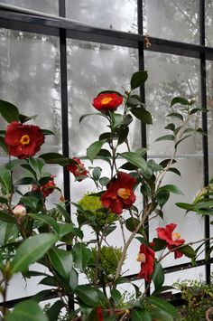 Growing with plants: Garden Blogger's Bloom Day, February 2014